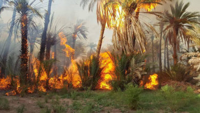 "Photo of اندلاع حريق مهول بأشجار النخيل بواحة ""آيت منصور"""